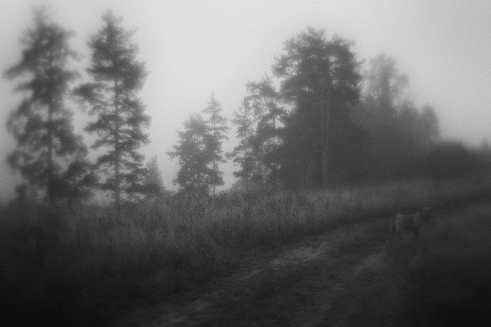 monoclemania-pskov-province-057.jpg