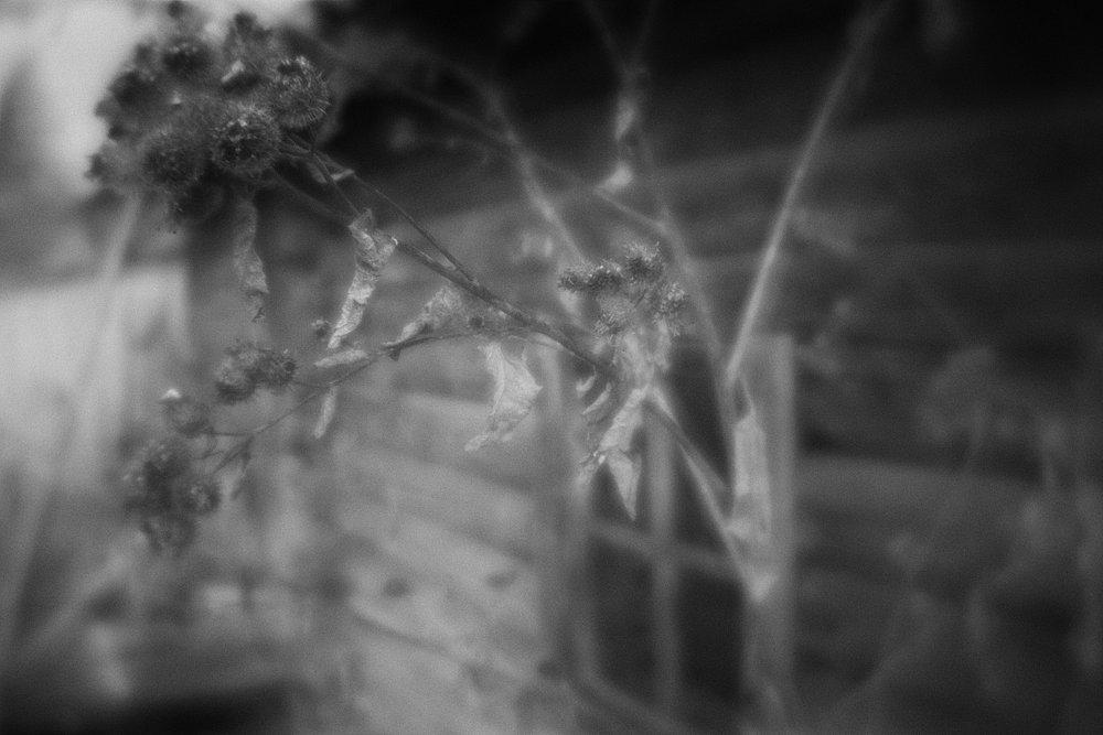 monoclemania-pskov-province-059.jpg
