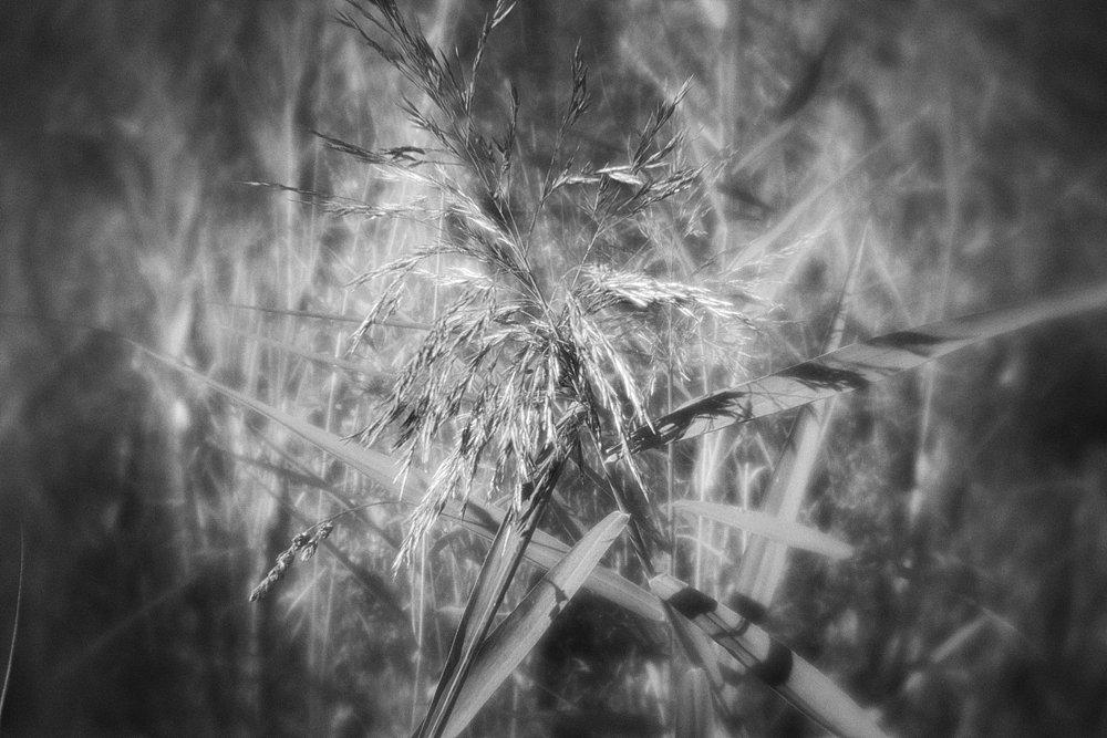 monoclemania-pskov-province-061.jpg