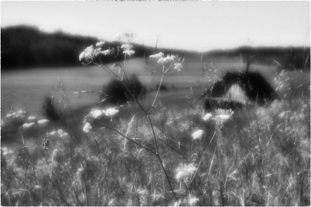monoclemania-pskov-province-092.jpg