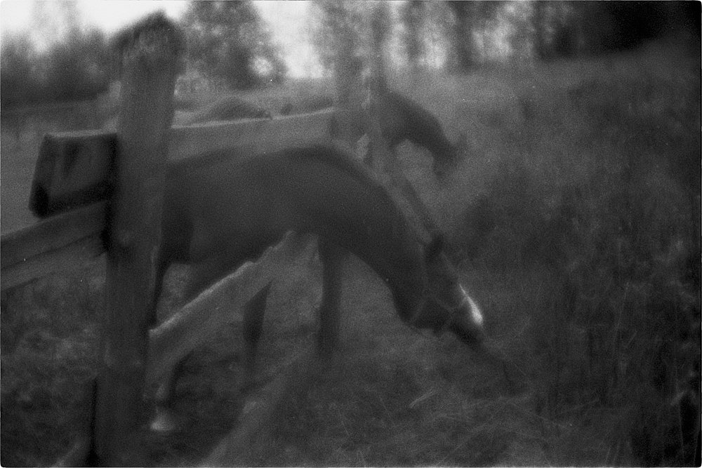monoclemania-horse-summer-1.jpg
