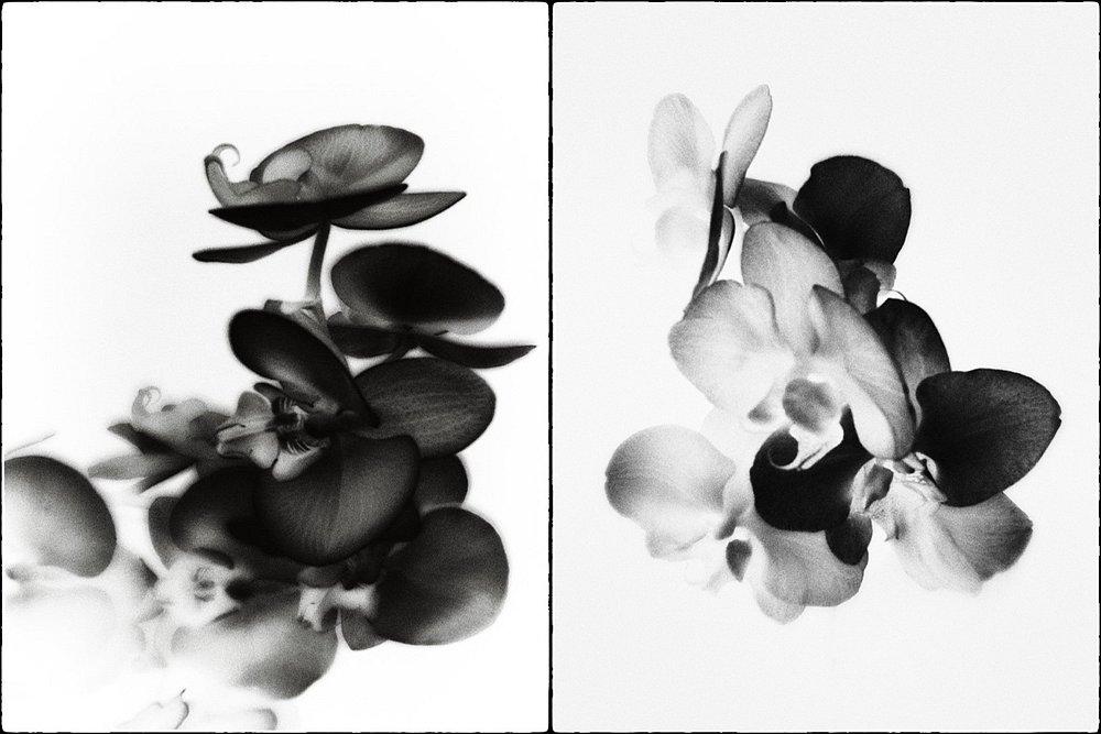 monoclemania-flowers-1.jpg