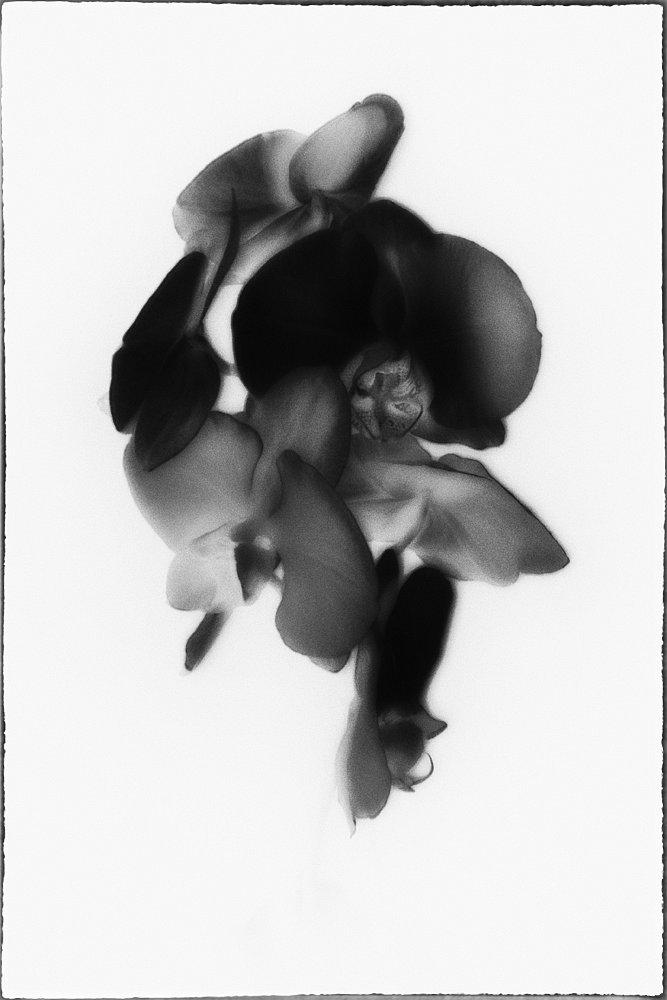 monoclemania-flowers-4.jpg