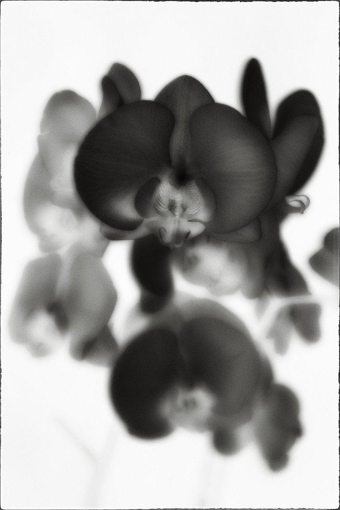 monoclemania-flowers-5.jpg