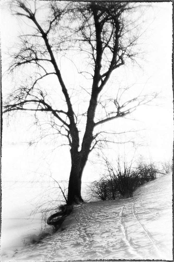monoclemania-haiku-11.jpg