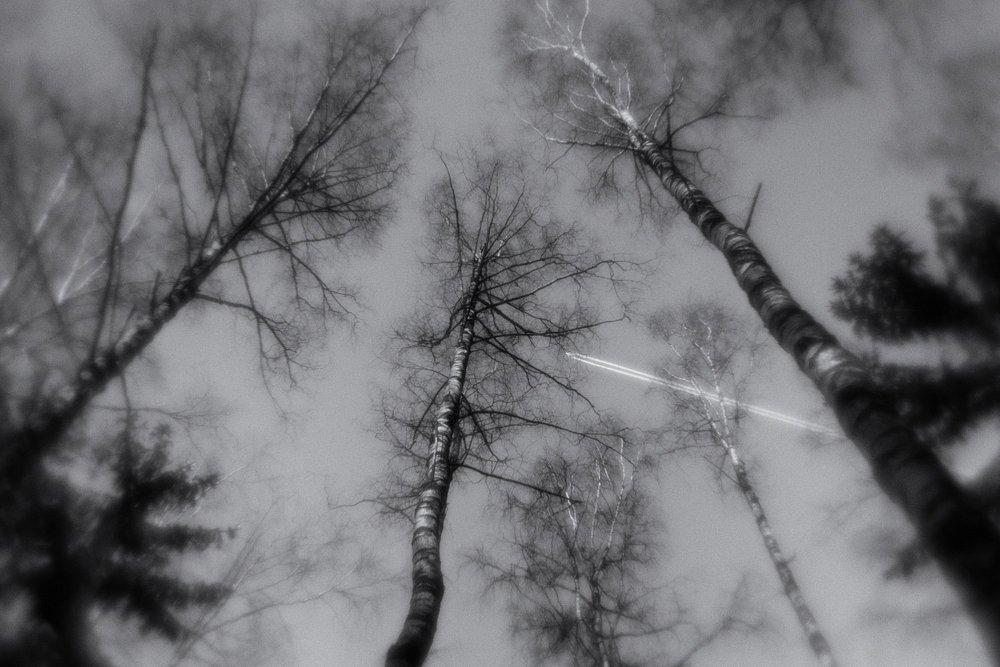 monoclemania-pavlovsk-park-01.jpg