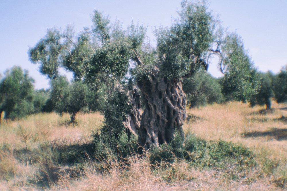 Halkidiki-13.jpg